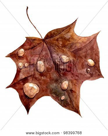 autumn maple leaf with drops of rain