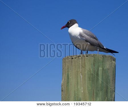 Seagull perched on top of a piling
