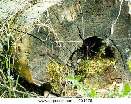 Old Tree Acquired A Moss