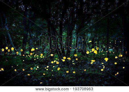 Fireflies flying in