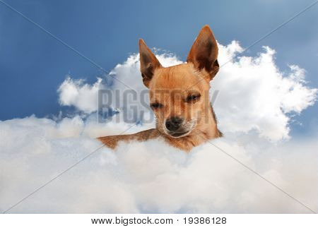 a tiny chihuahua on a cloud in the sky