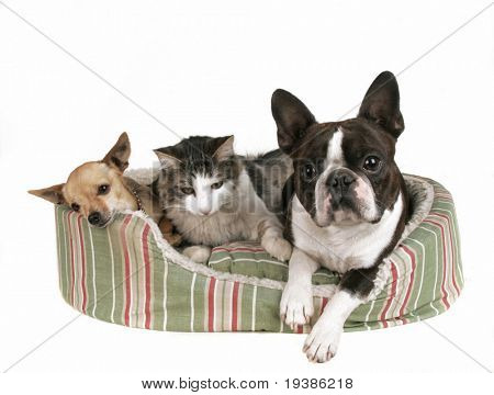 two dogs and a kitten in a pet bed