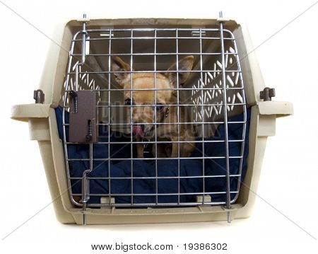 a tiny chihuahua in a small kennel with a bed