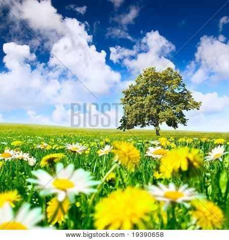 Tree in the meadow full of dandelions and camomiles