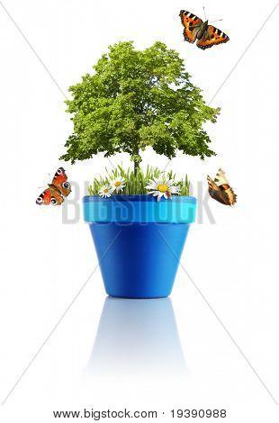 Nature in a pot