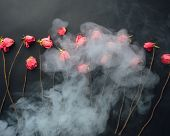goth style dry roses, black background with smoke poster