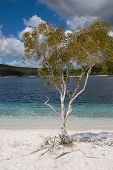 stock photo of mckenzie  - Lake McKenzie is an amazing clear lake on fraser island with super white sand - JPG