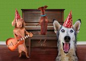 stock photo of dog birthday  - funny dog card - JPG