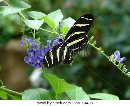 Yellow black butterfly on flower