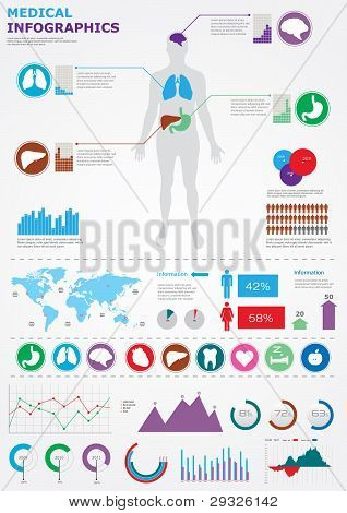 Medical Infographics. Human Body With Internal Organs With Detail Chats. Vector Eps 10