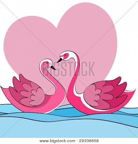 Vector illustration of two swans couples on a lake in setting heart conceptual  for Valentines Day and other occasions.