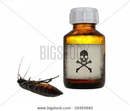 Old Bottle Of Poison And Dead Cockroach