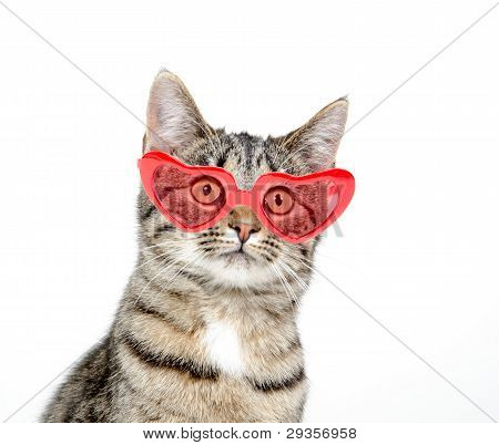 Cute Cat With Heart Sunglasseson White Background