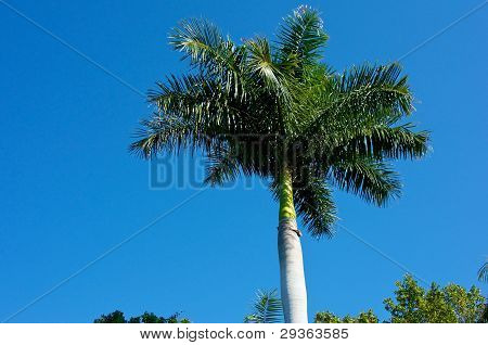 Palm Tree Against Sky