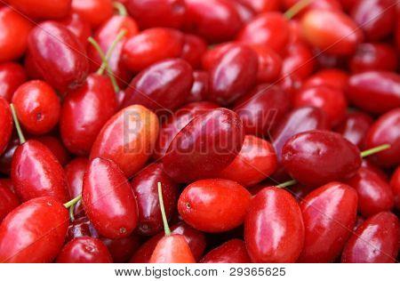 Fresh Cornelian Cherries