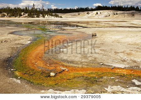 Stream In Norris Geyser Basin