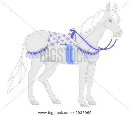 Gentle Arabian On White
