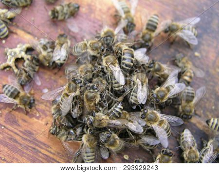 Cluster Requeening By Bees Colony
