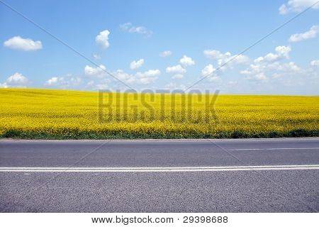 Country road near yellow rapeseed fields