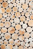 Cross Section Of Tree Trunks Background. Decoration Of Cutting Tree. Cutting Tree Trunks Placed For  poster