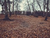Fallen Leaf In The Autumn Forest. Forest With Bare Trees And Dry Fallen Orange Autumn Leaves. Autumn poster
