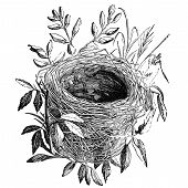 stock photo of nightingale  - Nest of sedge - JPG