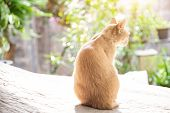 Stray Kitty Cat On Car In Morning Watch Camera poster