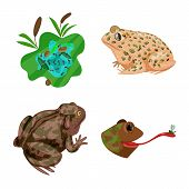 Isolated Object Of Frog And Anuran Logo. Collection Of Frog And Animal Stock Vector Illustration. poster
