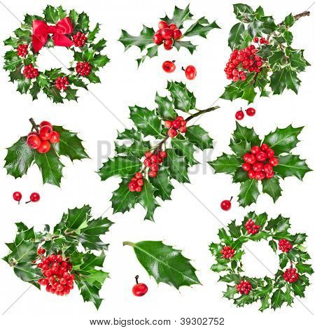Collection Christmas decoration of European holly ilex isolated on white background