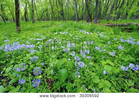 Spring Forest Scenery Illinois