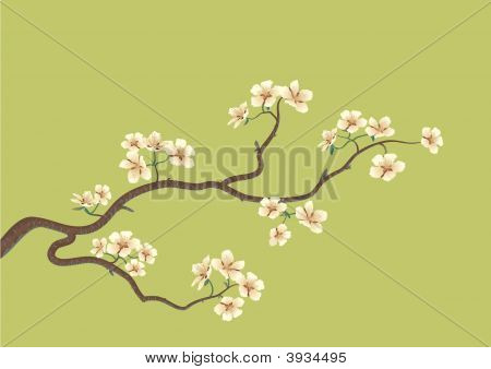Flowered Sakura