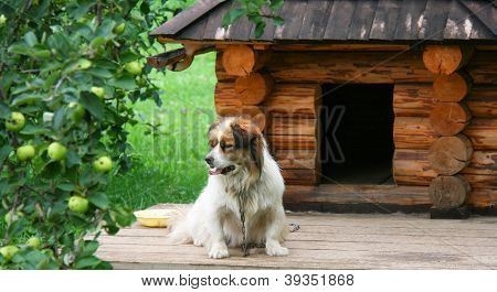 Dog Near Doghouse