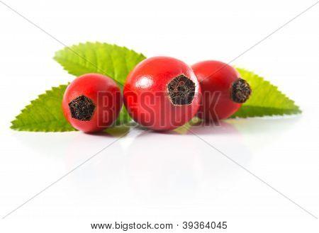 Three Dogrose
