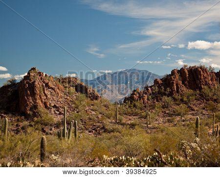 Saguaro Cactus Desert