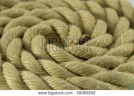 Rope Building Circles