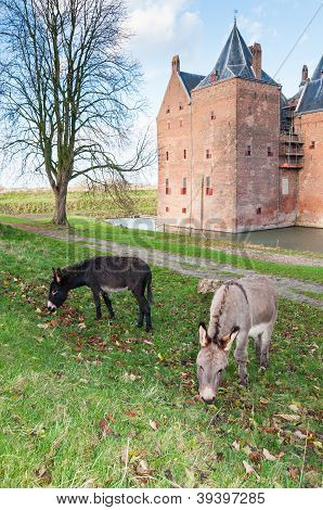 Two grazing donkeys and an old castle