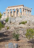 picture of argo  - A view of the Doric temple of Aphaia on Aegina island in the Saronic Gulf - JPG