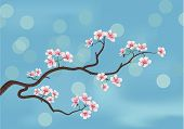 pic of cherry blossom  - This is the vector illustration of a flowered sakura japanese cherry tree - JPG