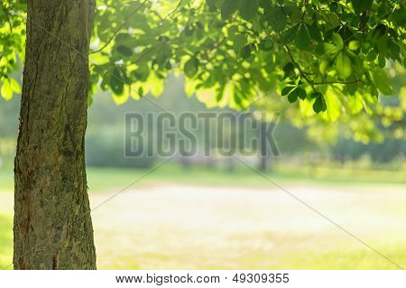 Chesnut Tree With Leaves