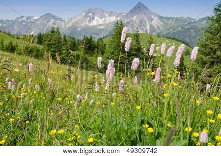 Flower Meadow In  Tirol Austria