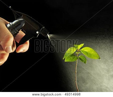 Spraying plants on black background