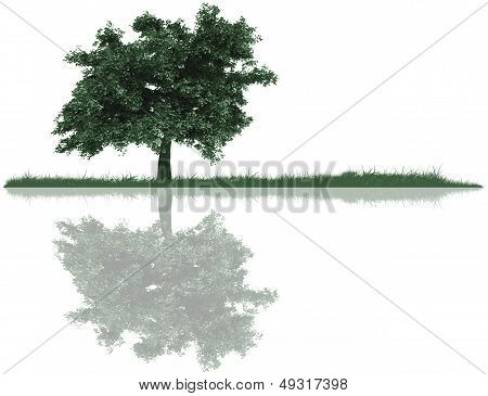 Tree, Grass And Reflection