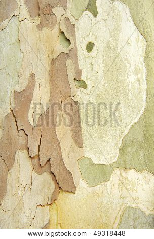 Natural camouflage of tree and peeling wood bark