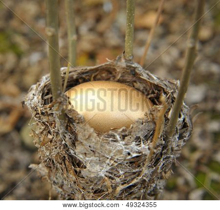 Golden Nest Egg