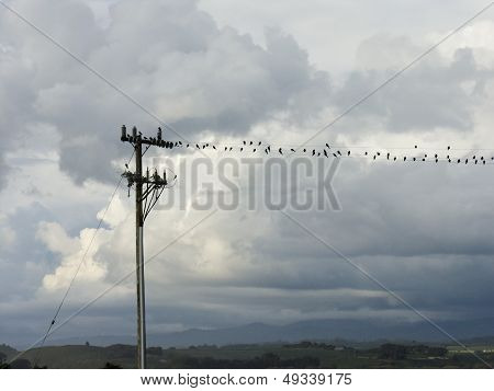 Birds On Phone Wire