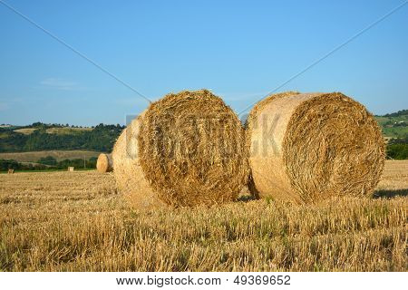 Hay bales - Hay rolls on field