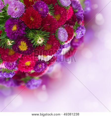 bouquet of fresh aster flowers on bokeh background