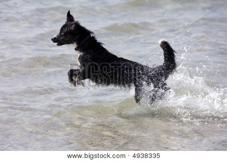 Jumping Dog In Water