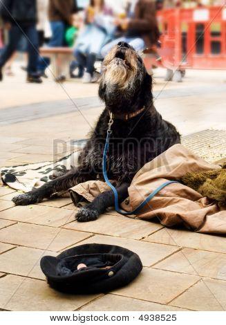 Homeless Dog Begging