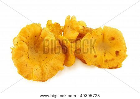 Chanterelles, Fresh Mushrooms